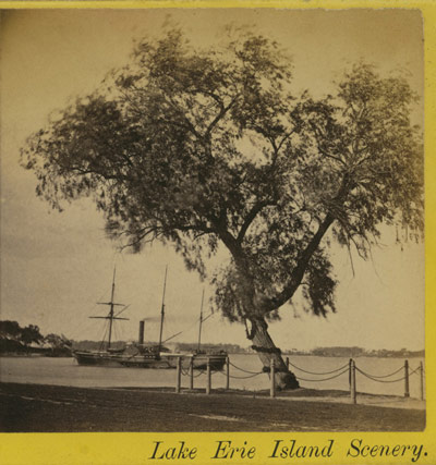 Scenes in Put-in-Bay: Willow Tree