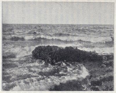 A Bit of Surf
