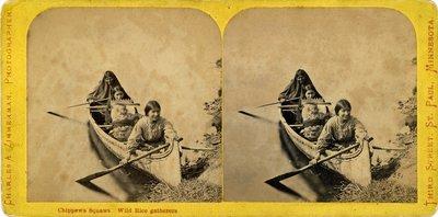 Chippewa Squaws. Wild Rice gatherers